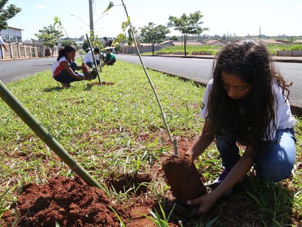 Projeto de Arborização Planejada do Município é lançado em Uberaba (Foto: Enerson Cleiton/PMU)