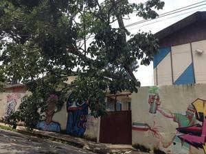 Árvore caiu sobre fiação e muro em escola de Juiz de Fora (Foto: Ana Cecília Almeida/Arquivo Pessoal)