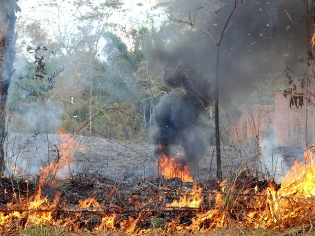 queimada urbana Acre (Foto: Veriana Ribeiro / G1)