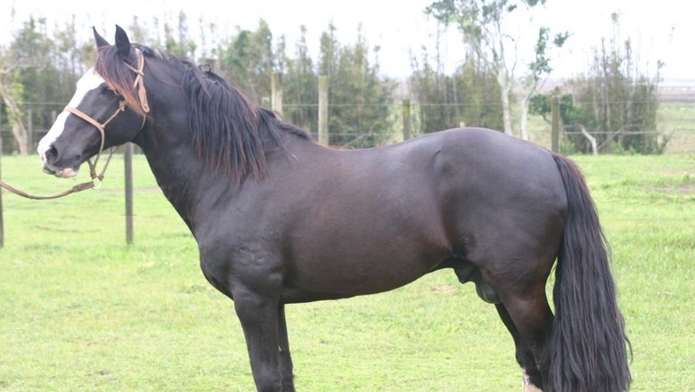 cavalo-la-frontera-tormento-morte (Foto: JG Martini)