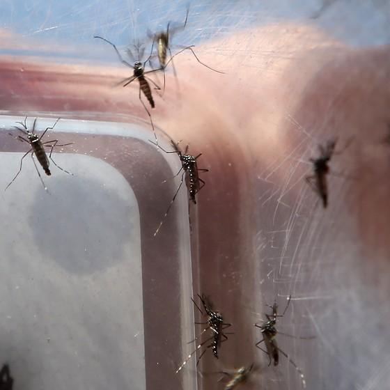 zika virus (Foto: FÁBIO MOTTA/ESTADÃO CONTEÚDO)