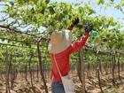 Prefeitura de Jarinu abre inscrições para curso gratuito de fruticultura