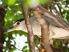 Após crise hídrica, aves alimentadas com peixe assado deixam de pescar