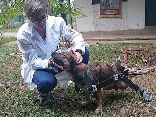 Dra. Érika Branco, professora da UFRA, coordena a pesquisa. (Foto: Divulgação/ Ascom UFRA)