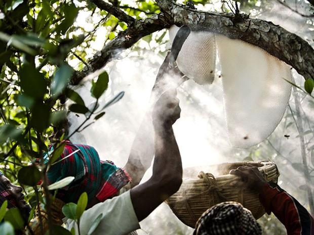"""Vencedora na categoria """"Tribos"""", imagem mostra mostra o perigoso trabalho dos caçadores de mel conhecidos como Maualis, em Bangladesh (Foto: Tim Gerard/www.tpoty.com/BBC)"""