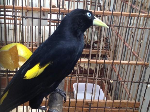 Ao total, 16 espécies foram registradas entre as 60 aves que foram apreendidas (Foto: Walter Paparazzo/G1)