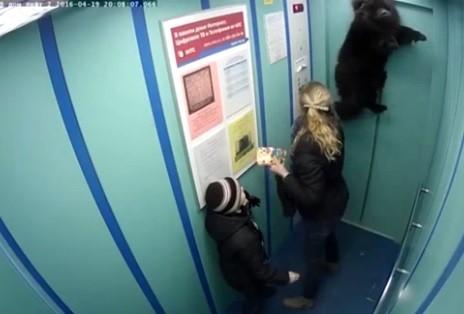 Cão preso na porta do elevador é erguido