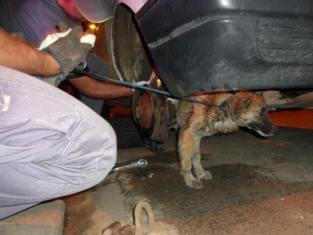 Cão ficou enroscado em roda de carro estacionado em São Carlos, SP (Foto: Thiago Caporasso)