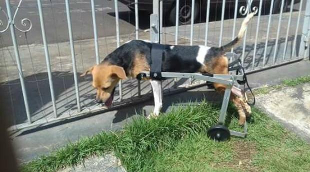 cachorro; cão; deficiência; cadeira de rodas; (Foto: Reprodução/Facebook/Glauber Pereira de Souza)