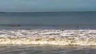 Cardume de arraias aparece na praia de Camburi, em Vitória