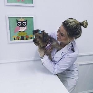 Os principais pacientes da dra. Rafaela Rocha são cães e gatos. (Foto: Arquivo Pessoal/ Rafaela Rocha Amorim Barros)
