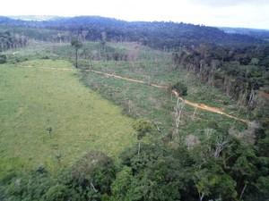floresta amazônica desmatamento Pará (Foto: Nelson Feitosa/Ibama)