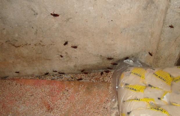 Quadrilha é presa suspeita de roubar e adulterar leite em goiás; alimentos eram guardados com baratas 2 (Foto: Reprodução / Polícia Civil)