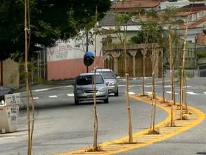 Prefeitura de SP planta árvores no asfalto para 'escapar' de calçada e fios (Foto: Reprodução TV Globo)
