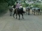 Índios e fazendeiros do sul da Bahia querem terras que seriam de reserva