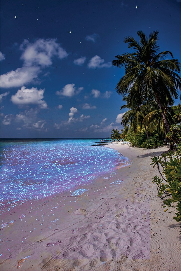 Bio luminescence. Illumination of plankton at Maldives. Many bright particles at the beach. (Foto: Getty Images/iStockphoto)