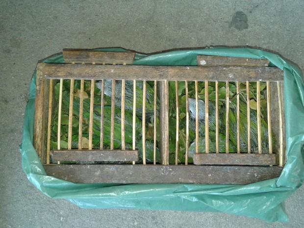 Filhotes de gangarra foram encontrados em uma gaiola e duas caixas (Foto: Divulgação/PRF)