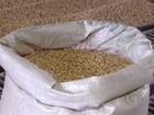 Criadores do RS começam a receber milho subsidiado pela CONAB
