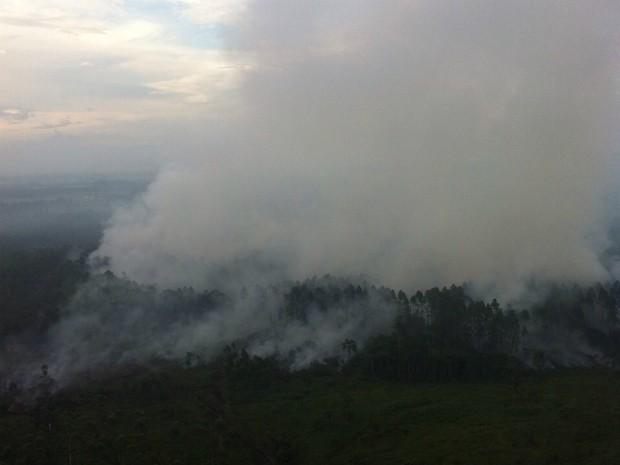 Na área, árvores tiveram raízes queimadas e correm o risco de cair (Foto: Pedro Silva/Divulgação)