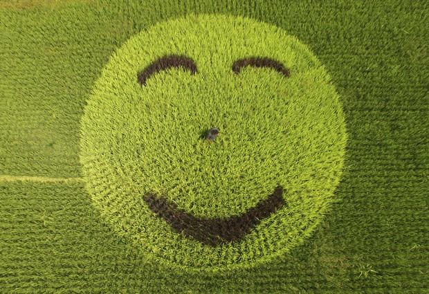 Rosto sorridente foi criado em plantação de arroz na China (Foto: Reuters)