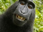 PETA pede na Justiça que macaco seja reconhecido como autor de selfie