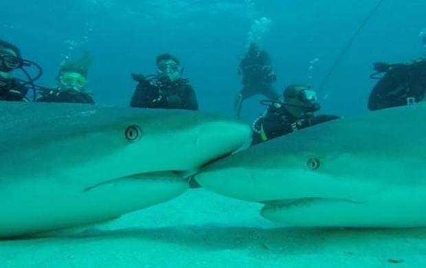 Italiano desenvolveu técnica para hipnotizar tubarões (Foto: BBC)