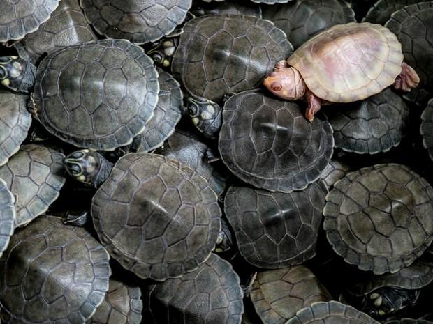 Animal é mais frágil que os outros (Foto: José Medeiros/ Gcom-MT)