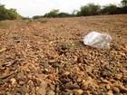 Um ano após crise hídrica, cidades traçam 'guerra' à falta de água em MG