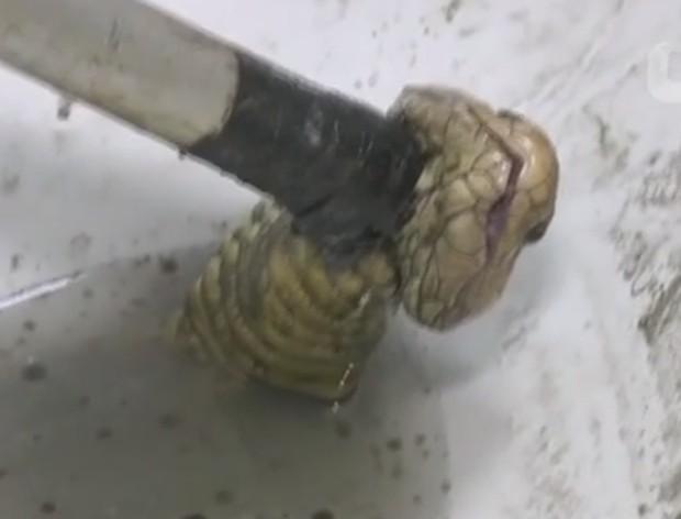 Pollapat Laokamnerdpetch disse que viu a cabeça da cobra instantes antes de usar a privada  (Foto: Reuters)