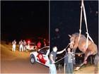 Égua fica em estado grave após ser atropelada em avenida de São Carlos
