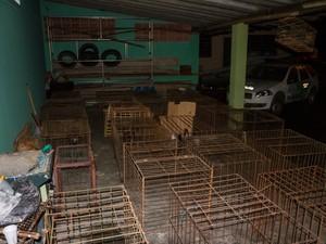 Galos eram mantidos em barracão fechado em Araraquara (Foto: Gabriela Martins/Tribuna Araraquara)