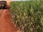 Vendas de etanol caem 14% em setembro, diz Unica
