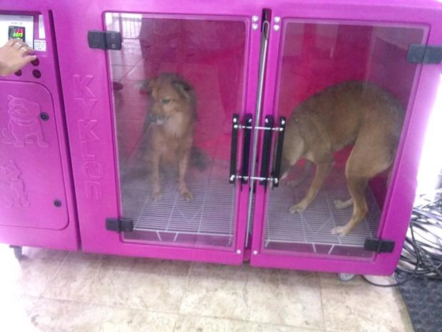Máquina usada para secar os pelos dos cachorros após brincadeiras na água. (Foto: Cristina Boeckel/ G1)