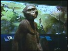 Lucy, o fóssil de 3 milhões de anos, teria morrido após cair de árvore