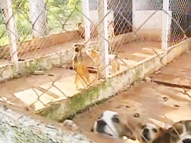 Cães vivem em local sujo e sem comida, flagrado pelo Tem Notícias (Foto: Reprodução / TV TEM)