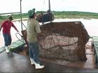 Produtores encontram mais peixes mortos em rio invadido por lama