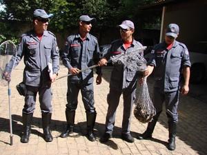 A equipe dos Bombeiros utilizou redes para capturar a macaquinha. (Foto: Divulgação/Corpo de Bombeiros)
