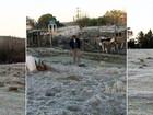 Em dia de frio no RS, geada cobre campos e até cachorro em Bagé