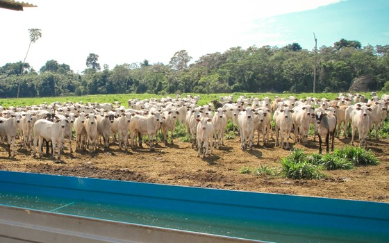 Bebedouro para o gado. Com o suprimento de água, os bois não pisoteiam as margens dos rios (Foto: Divulgação - Pecsa)