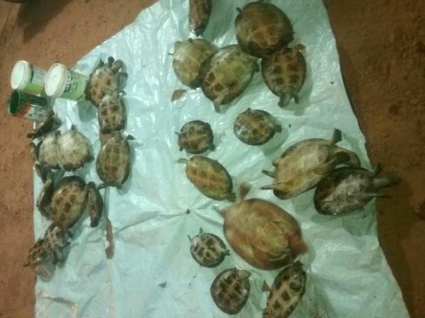 Polícia informou que comer a carne de tartaruga é um costume da região (Foto: Ivair Savoine/ Polícia Civil-MT)
