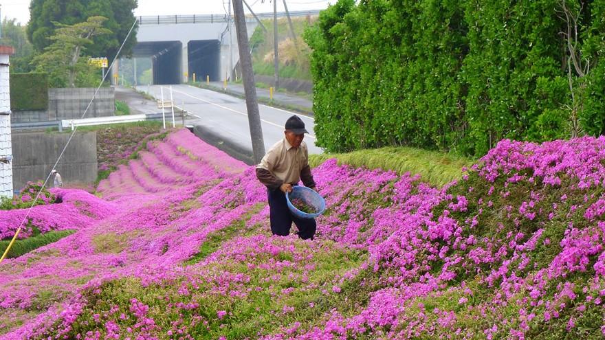 Flores3 (Foto: Reprodução/Youtube)