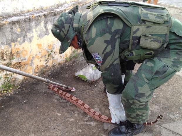 Cobra é capturada em João Pessoa pela PM Ambiental (Foto: Walter Paparazzo/G1 PB)