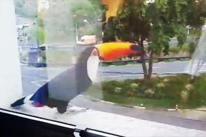 Tucano usa janela como espelho (Vanderlei Duarte/TG)