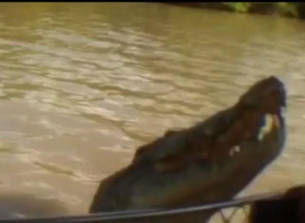 Enorme réptil saltou ao lado do barco e quase mordeu a mão do guia (Foto: Reprodução/Live Leak/Aussie)