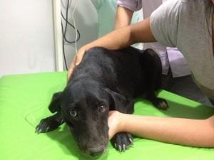 suspeito; zoofilia; cachorra; amapá (Foto: Jéssica Alves/G1)