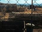 Contra más condições de trabalho, operários paralisam obras na Papuda
