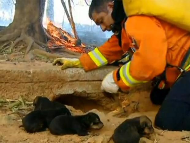 Filhotes de cães foram retirados de um buraco pelos bombeiros (Foto: Reprodução/ TV Globo)