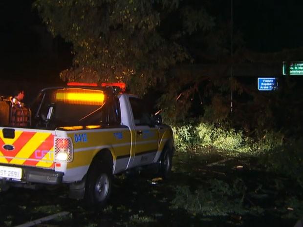 Árvore caída interditou parte das pistas do Corredor Norte-Sul na madrugada (Foto: Reprodução/TV Globo)