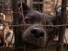 Casal que abriga 400 animais vê aumento em abandonos e pede ajuda