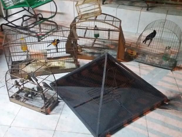 Pássaros apreendidos em Samambaia (Foto: Polícia Militar/Divulgação)